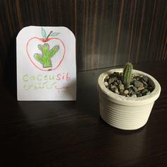 کاکتوس انگشتی با گلدان سیمانی( سایز 1 )