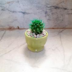 کاکتوس اچینو تیغ رنگی در گلدان سرامیکی سبز رنگ